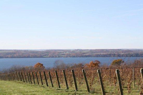 Lodi, estado de Nueva York: View of Vineyard facing Seneca Lake