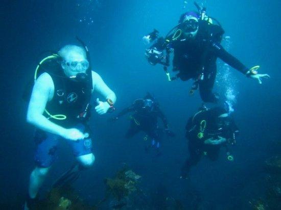 Whangarei, نيوزيلندا: diving