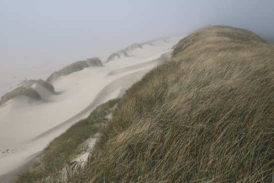 Oregon Dunes National Recreation Area-billede