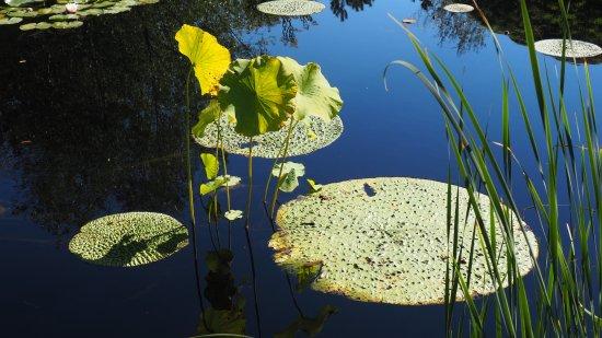 Chaumont-sur-Loire, Frankreich: Jardin du Hualu