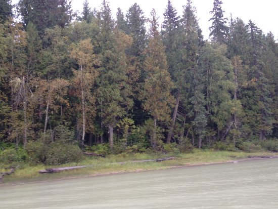 Blue River, Kanada: the forest from the boat