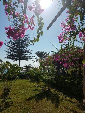 Nissi Beach Resort: IMG-20160925-WA0102_large.jpg