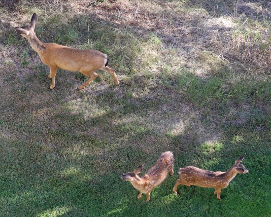 Klamath Falls, OR: Deer family below our balcony