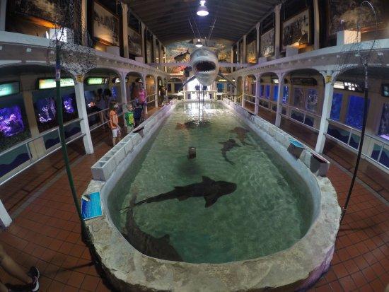 Piletas Con Tiburones Picture Of Key West Aquarium Key West Tripadvisor