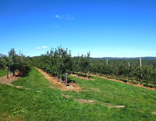 Shelburne Falls, MA: Apex Orchards