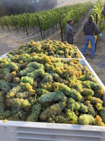 Paso Robles, CA: Harvest 2016 in full swing