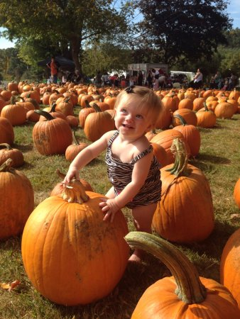 Bethlehem, CT: My granddaughter ......chose a pumpkin or take bus up to field ...