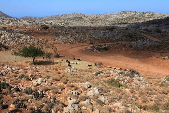 Ravdoucha, Grèce : Goats in the wilderness
