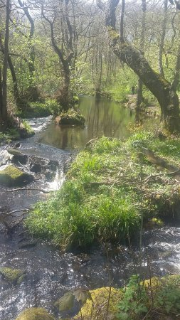 Rivelin Valley Nature Trail: 20160504_140428_large.jpg