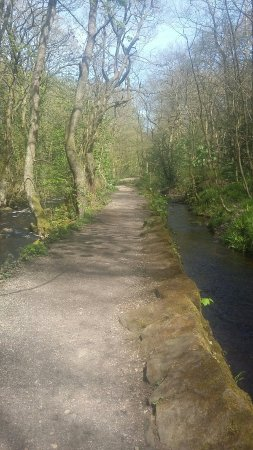 Rivelin Valley Nature Trail: 20160504_135803_large.jpg
