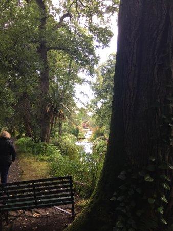 Ashford, Irlanda: Another vies