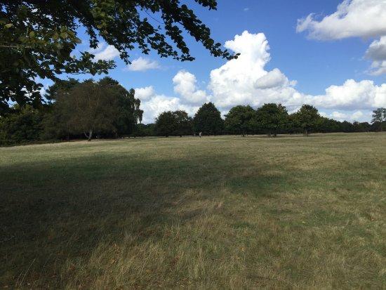 Richmond-upon-Thames, UK: photo1.jpg