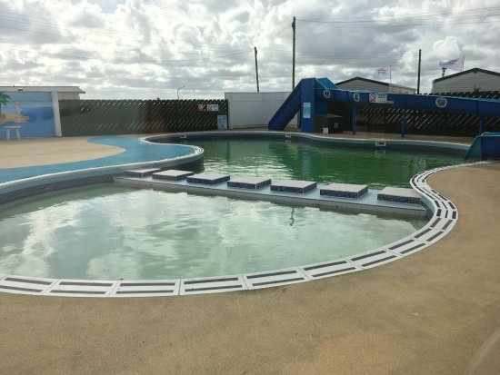 Driffield, UK: Outdoor heated pool — we could look, but not touch!