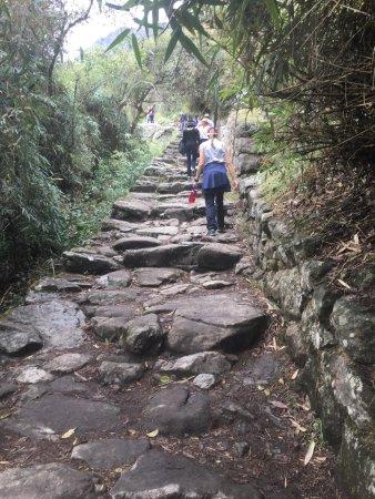 Llama Path: photo2.jpg