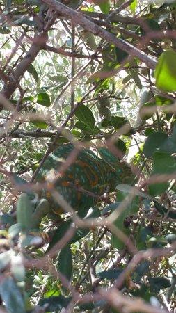 Biotopoi Nature Park: chameleon