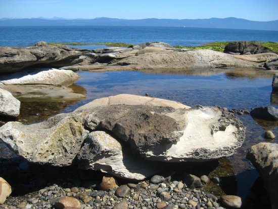Hornby Island, Canadá: Low tide tidal pool.