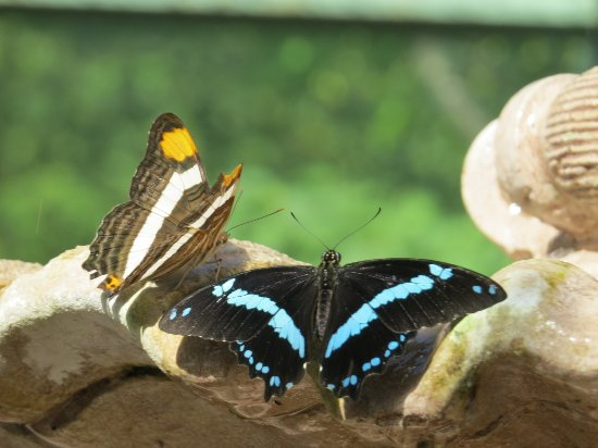Wings of Mackinac Butterfly Conservatory: Double up