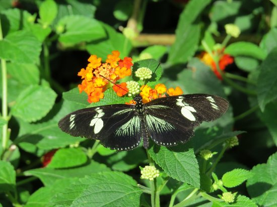 Wings of Mackinac Butterfly Conservatory: Butterflies and flowers