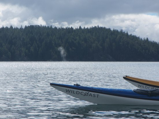 Quadra Island, Canada: Humpback Whale spouting in the distance