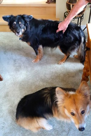 The Master Suite Bed and Breakfast: 2 of Donna and Jim's four-legged children!