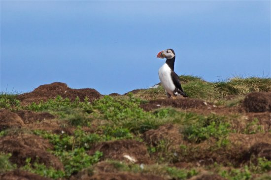 Elliston, Canadá: Am I Good Looking Or What!