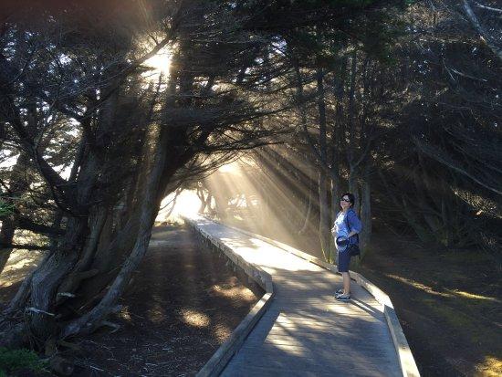 MacKerricher State Park 사진