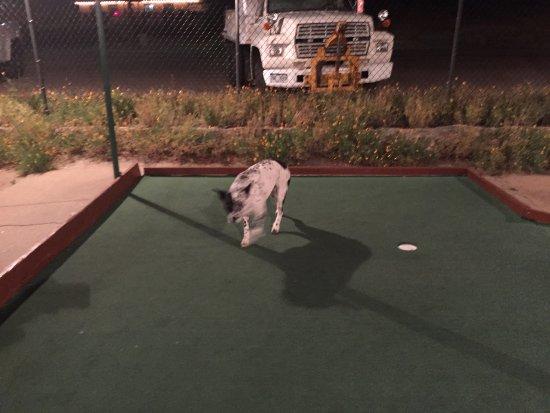 Tiny Town Miniature Golf : photo1.jpg