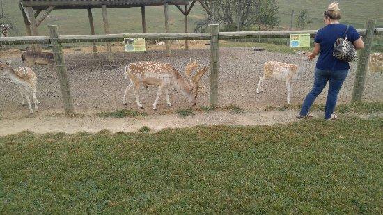 Max Meadows, Вирджиния: Animals on your taken 9/25/16