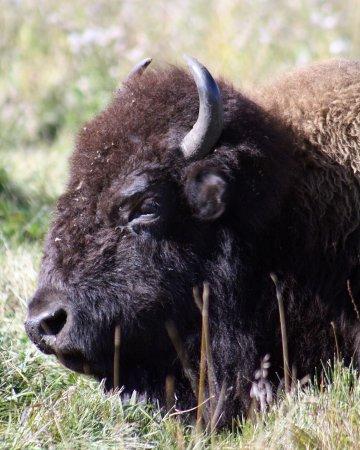 Elk Island National Park: photo0.jpg