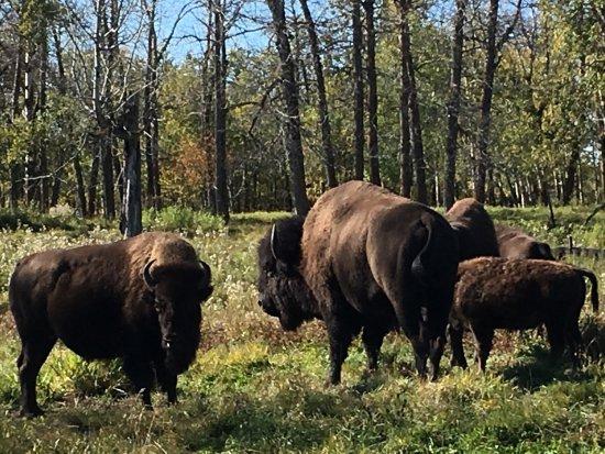 Elk Island National Park: photo2.jpg