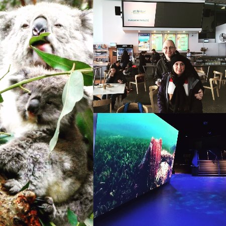 Phillip Island, Αυστραλία: Antarctic Journey and Koala Conservation Centre Tour