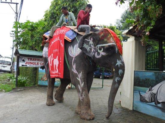 Foto de Travellers Jungle Camp