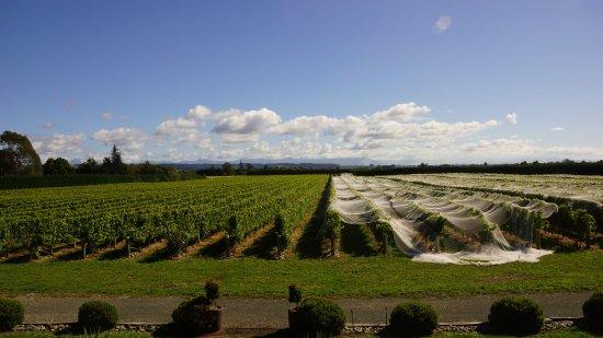 Richmond, Nouvelle-Zélande : Pre-Harvest