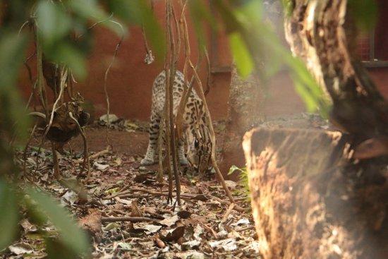 animales en recuperacion picture of guiraoga puerto