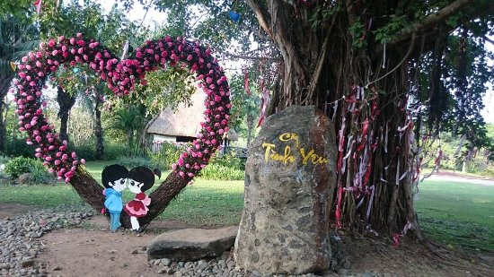 Trang Bom, Vietnam: Legend that if the couple tie knots in the love tree will love each other for over the life