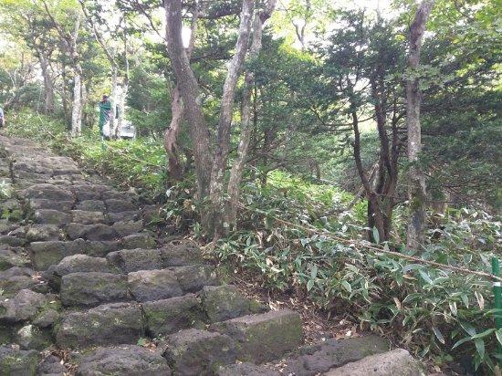 写真漢拏山国立公園枚