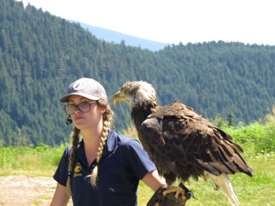 นอร์ทแวนคูเวอร์, แคนาดา: Bird Show