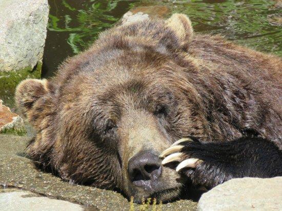 North Vancouver, Canada: Sleepy Bear