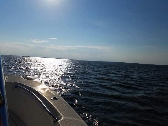 Hinesville, GA: A few pictures from our recent excursion to Saint Catherine's Island with Sea Dog Charters.