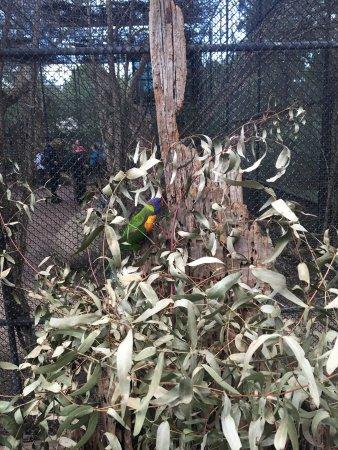 Healesville, Australia: photo9.jpg