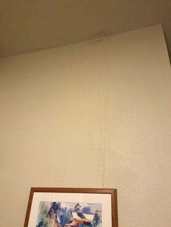 Kent, WA: Ceiling leaks