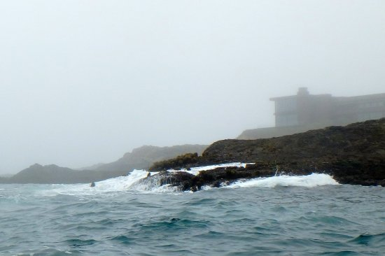Kayak Mendocino : The fog was beautiful from the ocean.