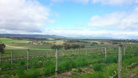 Seppeltsfield, Australia: DSC_0440_large.jpg