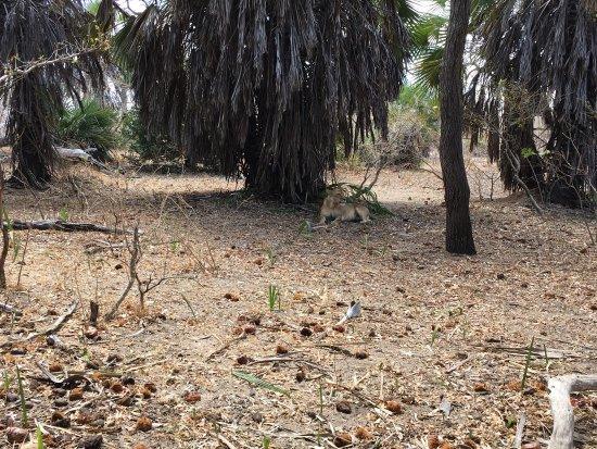 Selous Game Reserve, Tanzania: photo5.jpg