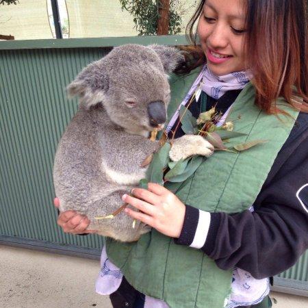 Байфорд, Австралия: Hug Koala
