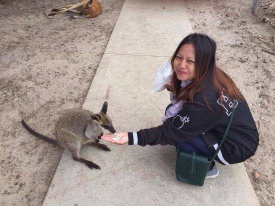 Byford, Australia: Walabi