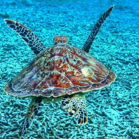 Gili Islands, Endonezya: IMG_20160922_144900_large.jpg