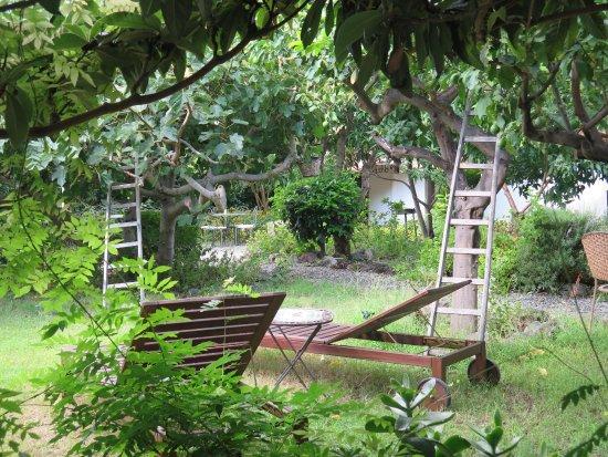Santa Marina Salina, Italia: Jardin au calme