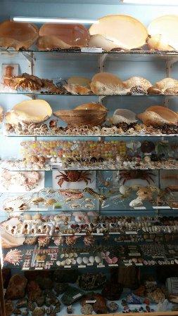 Griffiths' Sea Shell Museum & Marine Display: 20160924_145137_large.jpg