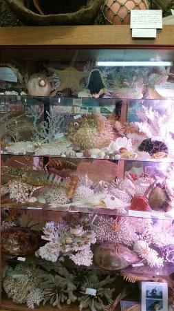 Griffiths' Sea Shell Museum & Marine Display: 20160924_145320_large.jpg